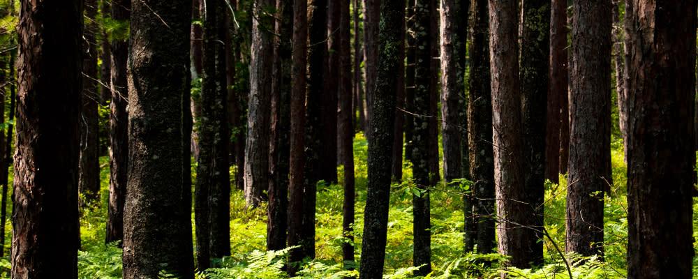 <div class='title'>           billboard photo sleep bear national forest         </div>