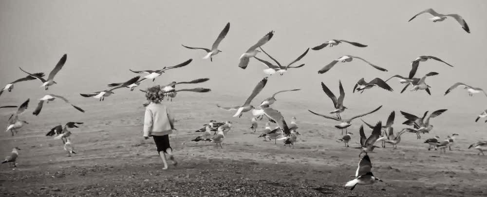<div class='title'>           Chasing Birds         </div>