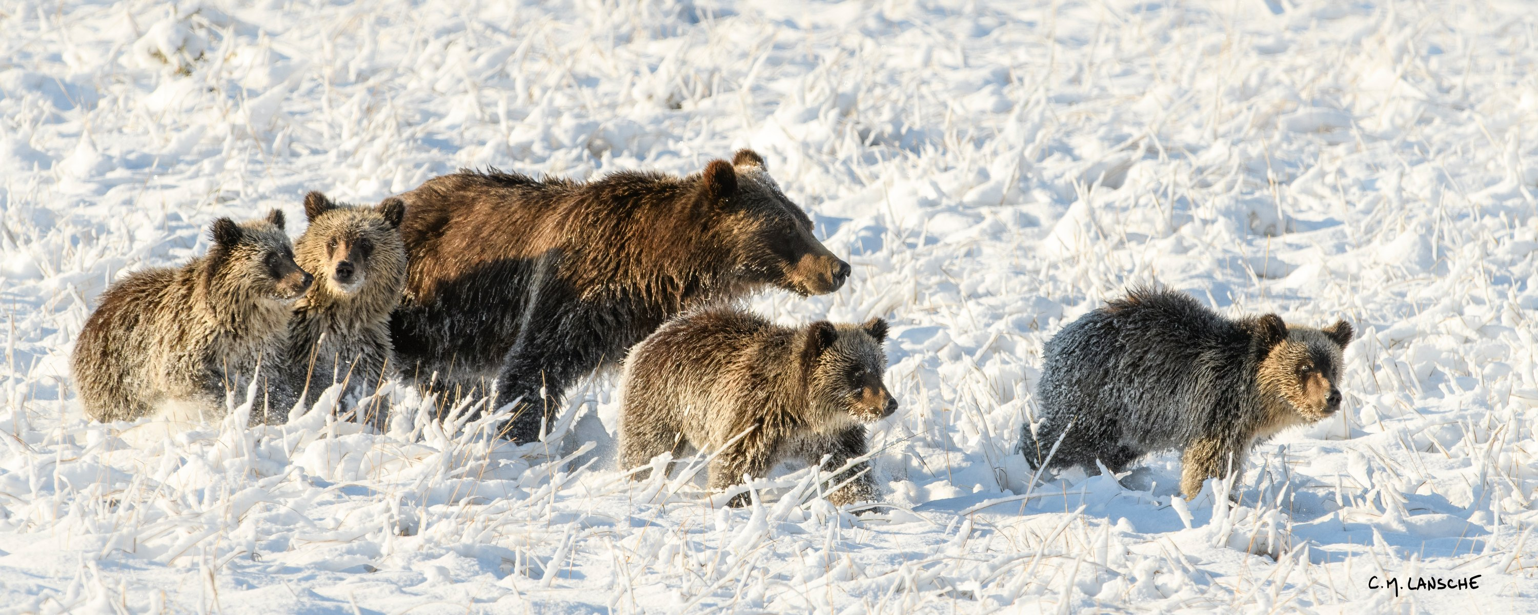 <div class='title'>           First Snow Grizzly 399 and Quads           </div>                 <div class='description'>           First Snow Grizzly 399 and Quads           </div>