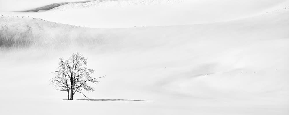 <div class='title'>           Lonesome Tree 1000x400         </div>