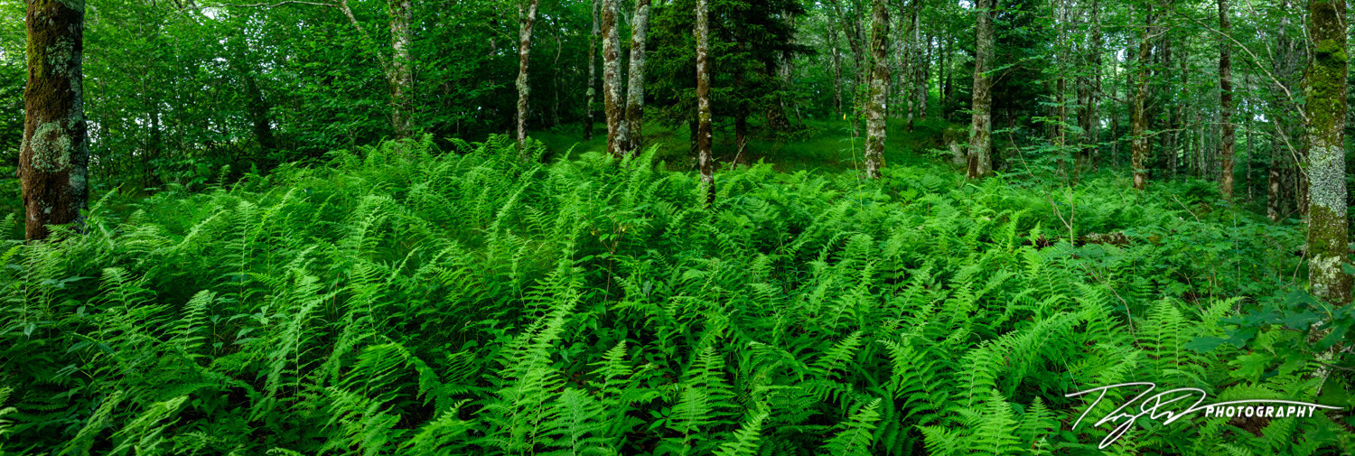 <div class='title'>           20200718 20 07 18 Fern Forest 3424 Pano Edit RWD Photography (Web) 2         </div>