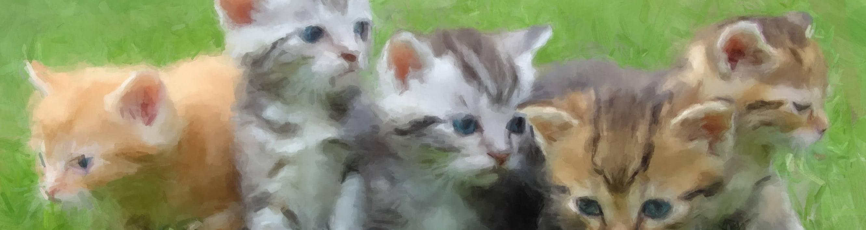<div class='title'>           kittens banner resized         </div>