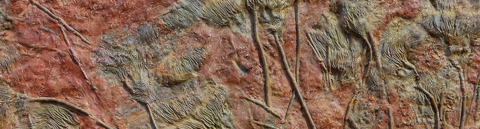 <div class='title'>           Fossil Flowers banner         </div>