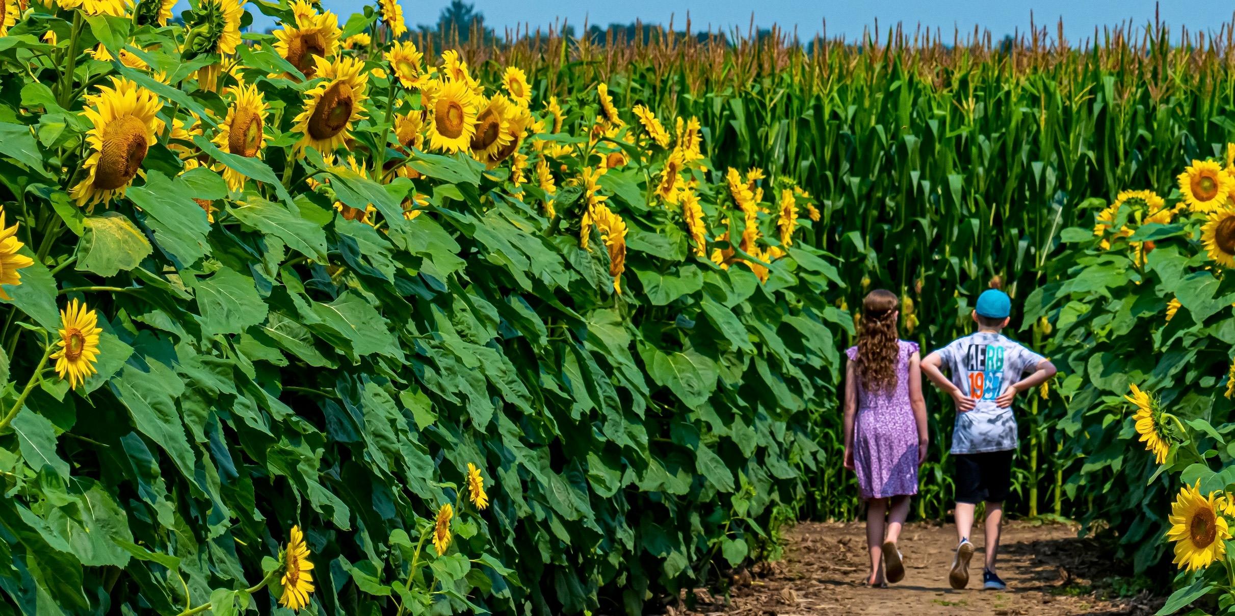 <div class='title'>           SunflowerWalk         </div>