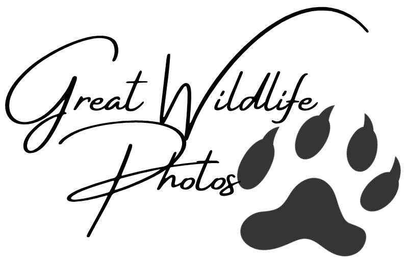 greatwildlifephotos
