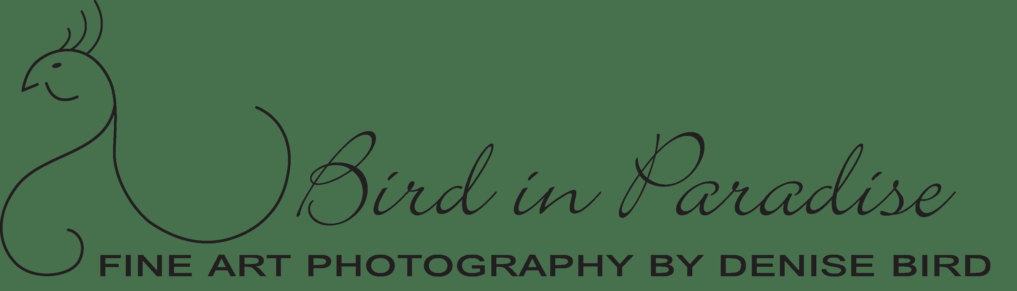 Denise Bird In Paradise
