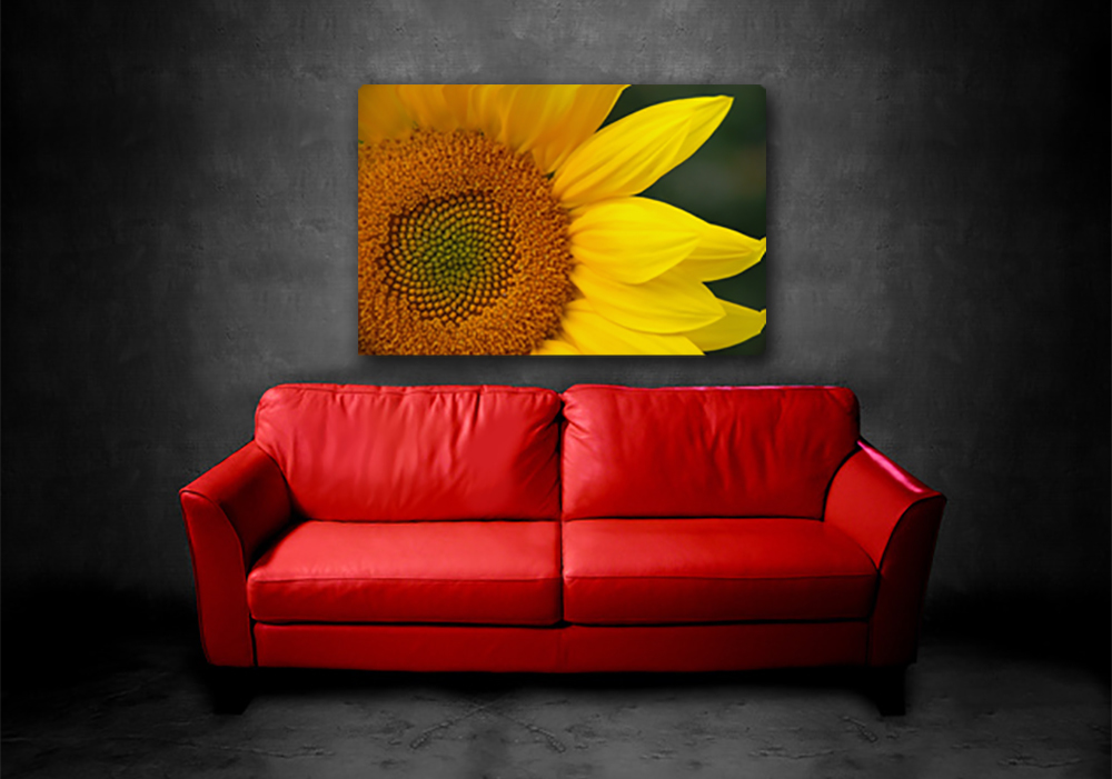 Couch-w-sunflower-2_jc4pyz