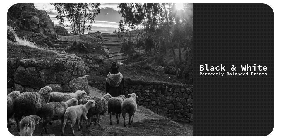 Sheep-banner-1_fkvr7b
