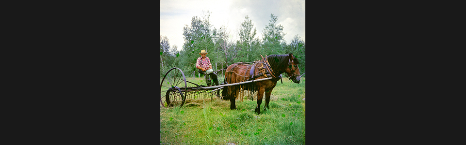 Horse_enhanced_sv3a0x