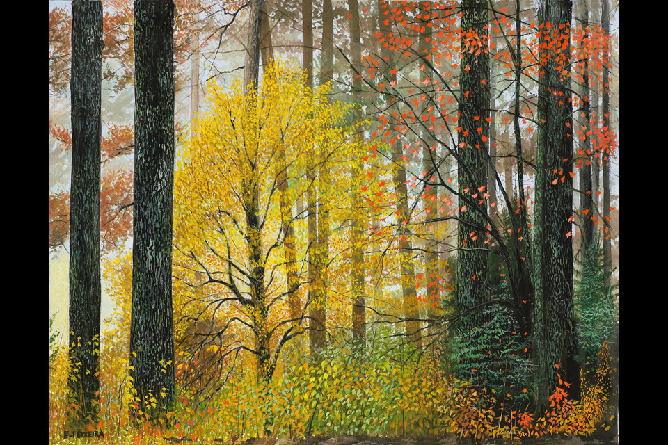 Autum_forest_96ge_jkp12o