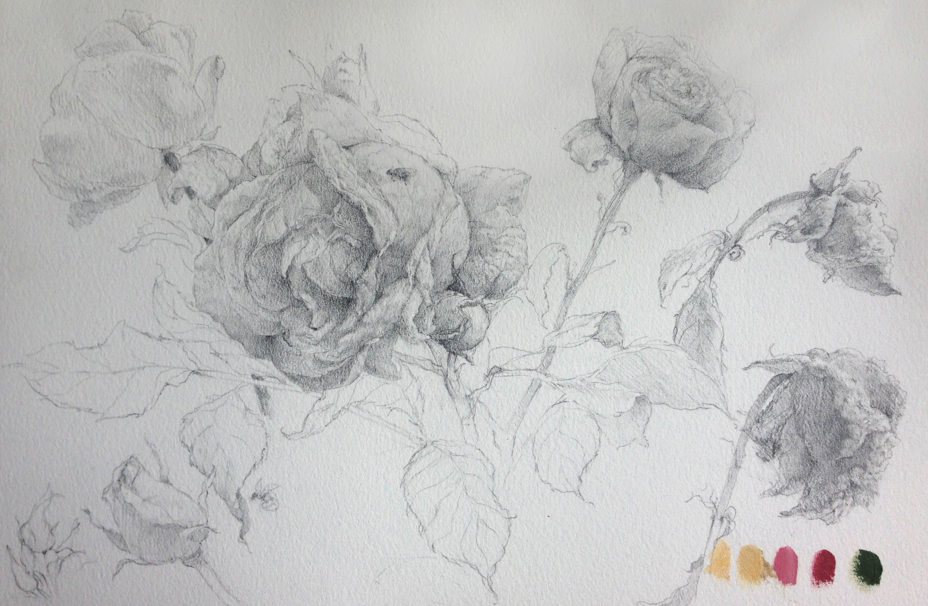 Seven_roses_-_rafferty_-_drawing_gagave