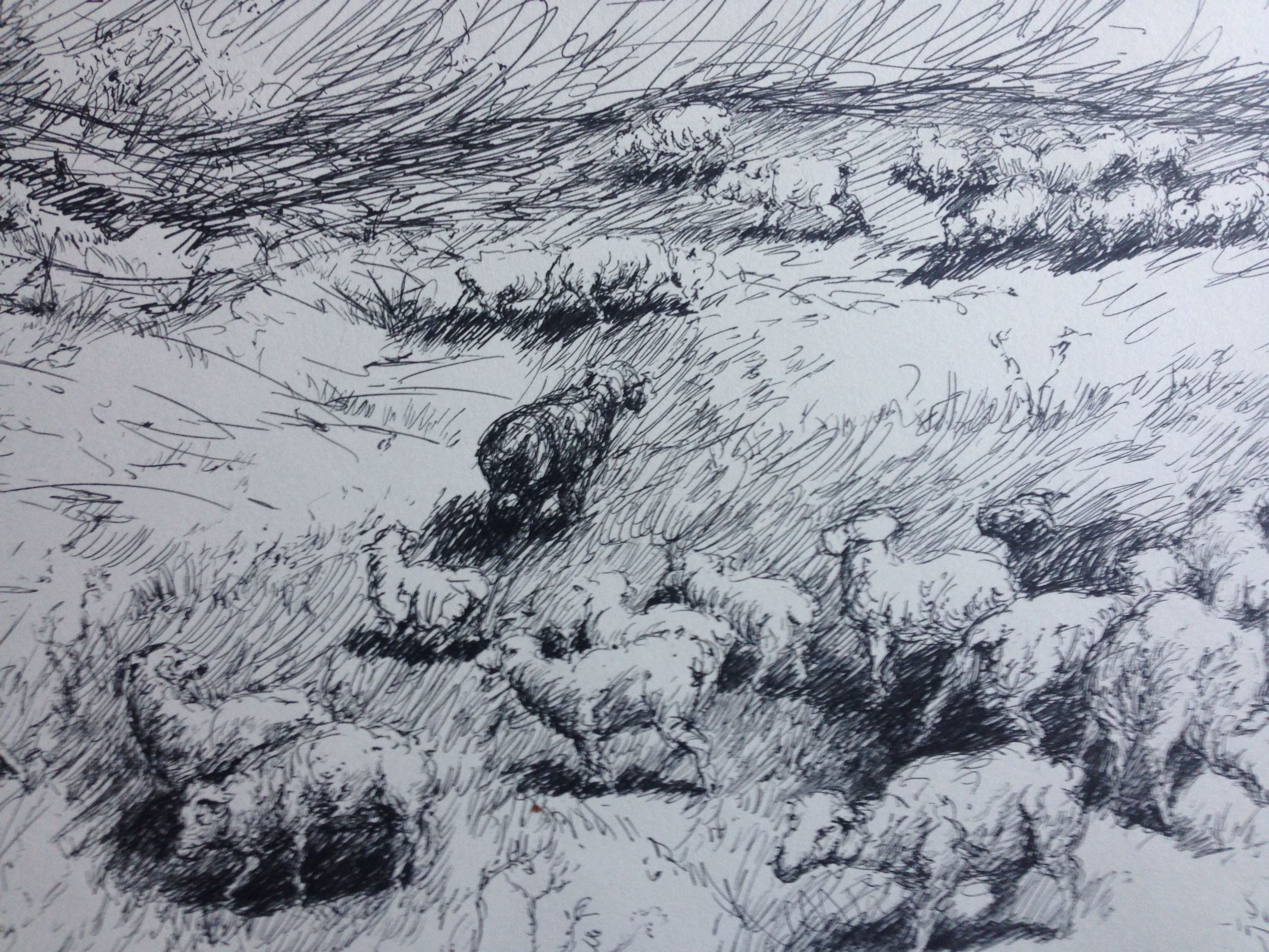 Sheeps_study1_-_rafferty_-_drawing_zyuzea