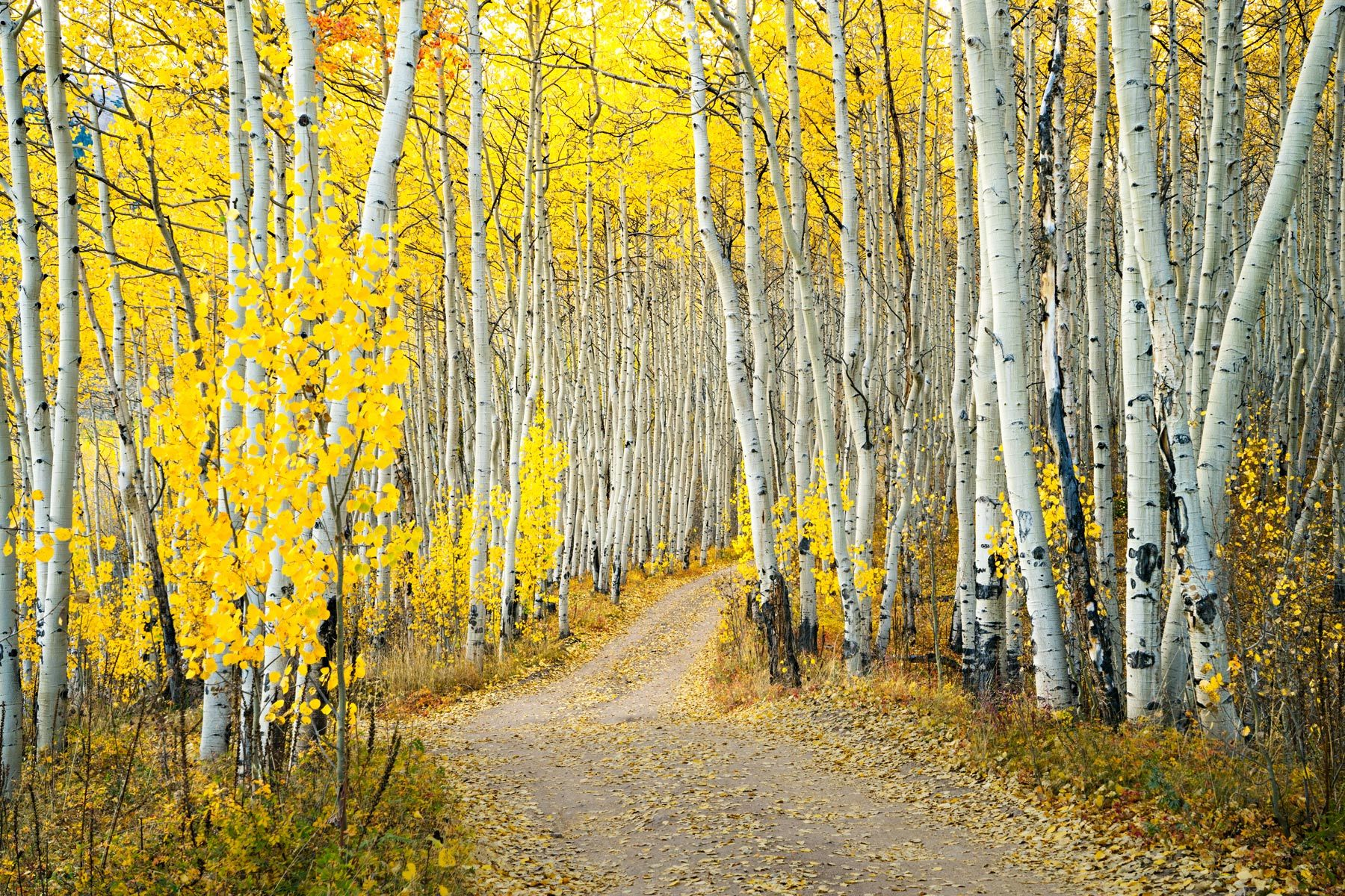 5965-fall-rd-h-mt-elbert-use-4x6_nyjhfm