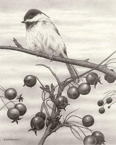 Chickadee-fall_vppryh