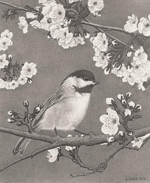 Chickadee-spring_ndyjbz