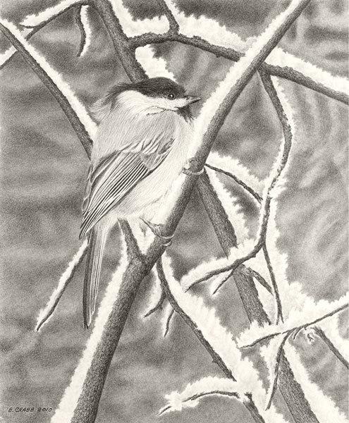 Chickadee-winter_ejlunk