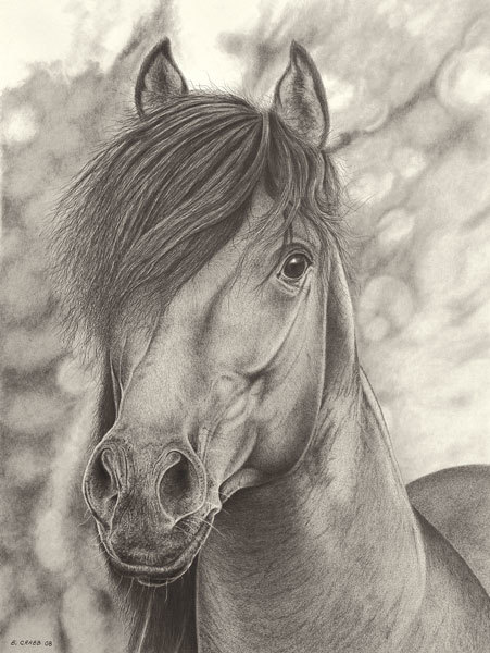 Horse-portrait_yhdcat