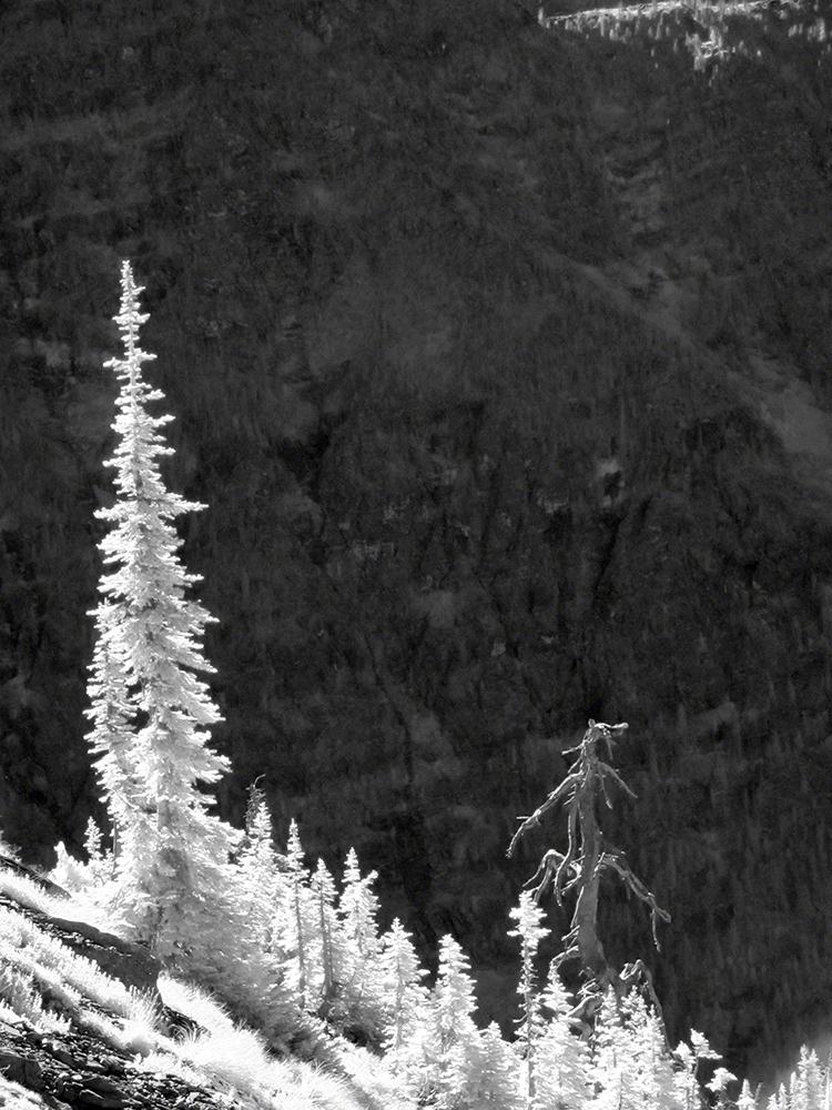 Bar068_glaciernationalparkviewfromsperrychalet_lu95rw