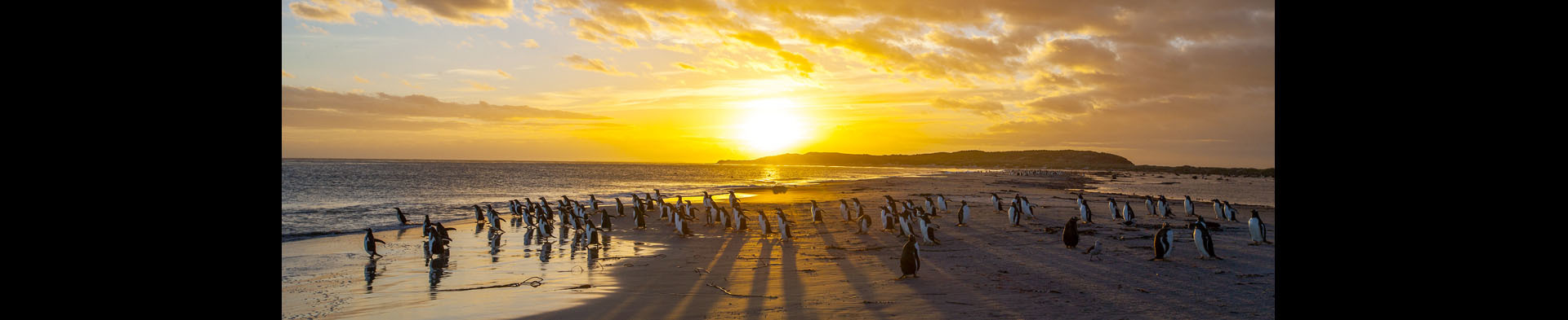 <div class='title'>           Penguin Sunrise         </div>                 <div class='description'>           Penguins on the Falkland Islands         </div>