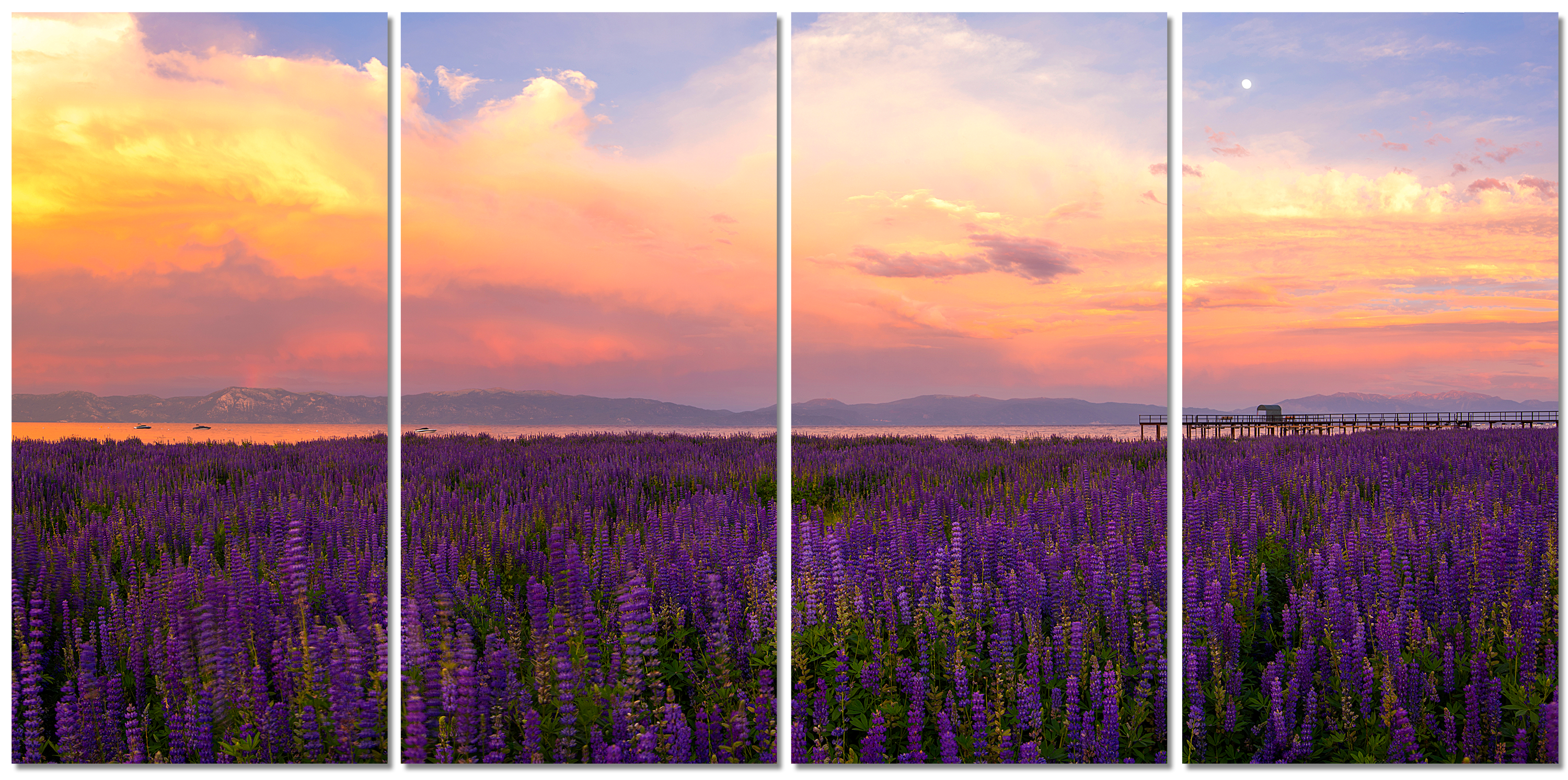 Tahoe city lupines sunset 80x40 4 piece canvas art wall qgnyax