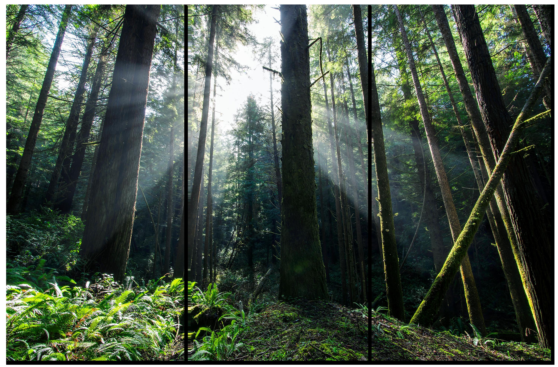 Enchanted forest 3 piece canvas ceqcnc