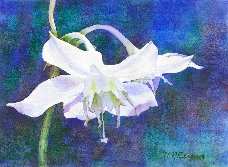 Lily gaha9b