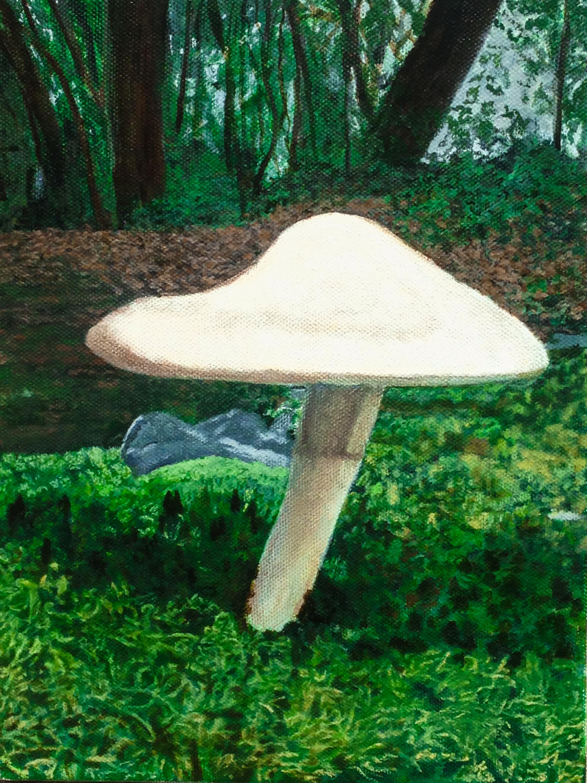 Cabin mushroom 1 of 1 fgbb4h