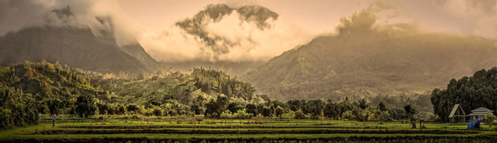 <div class='title'>           Kauai-TaroPlantation-8x2         </div>