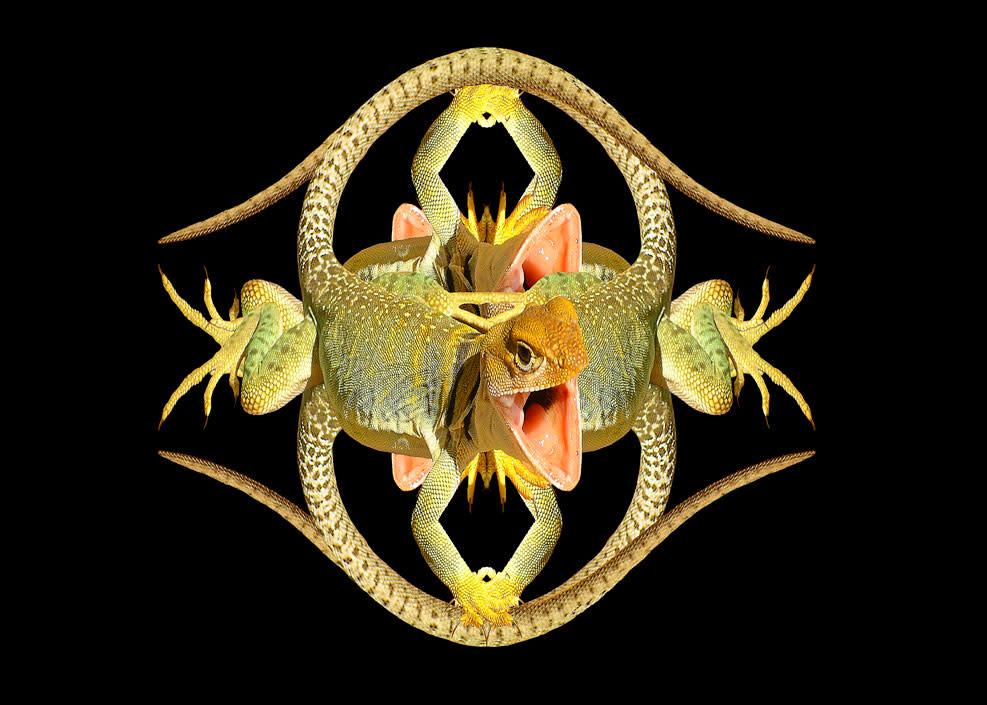 Lizard 02 4 lizards 01 14x10 x1qsm3