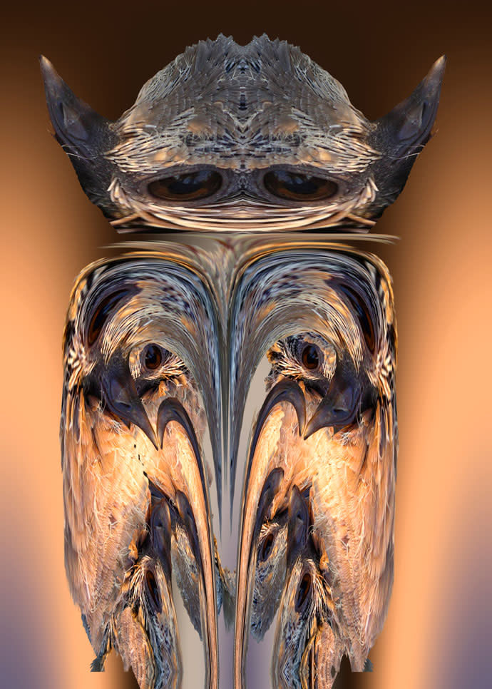 Dove owl 01 yoda04 uztac7