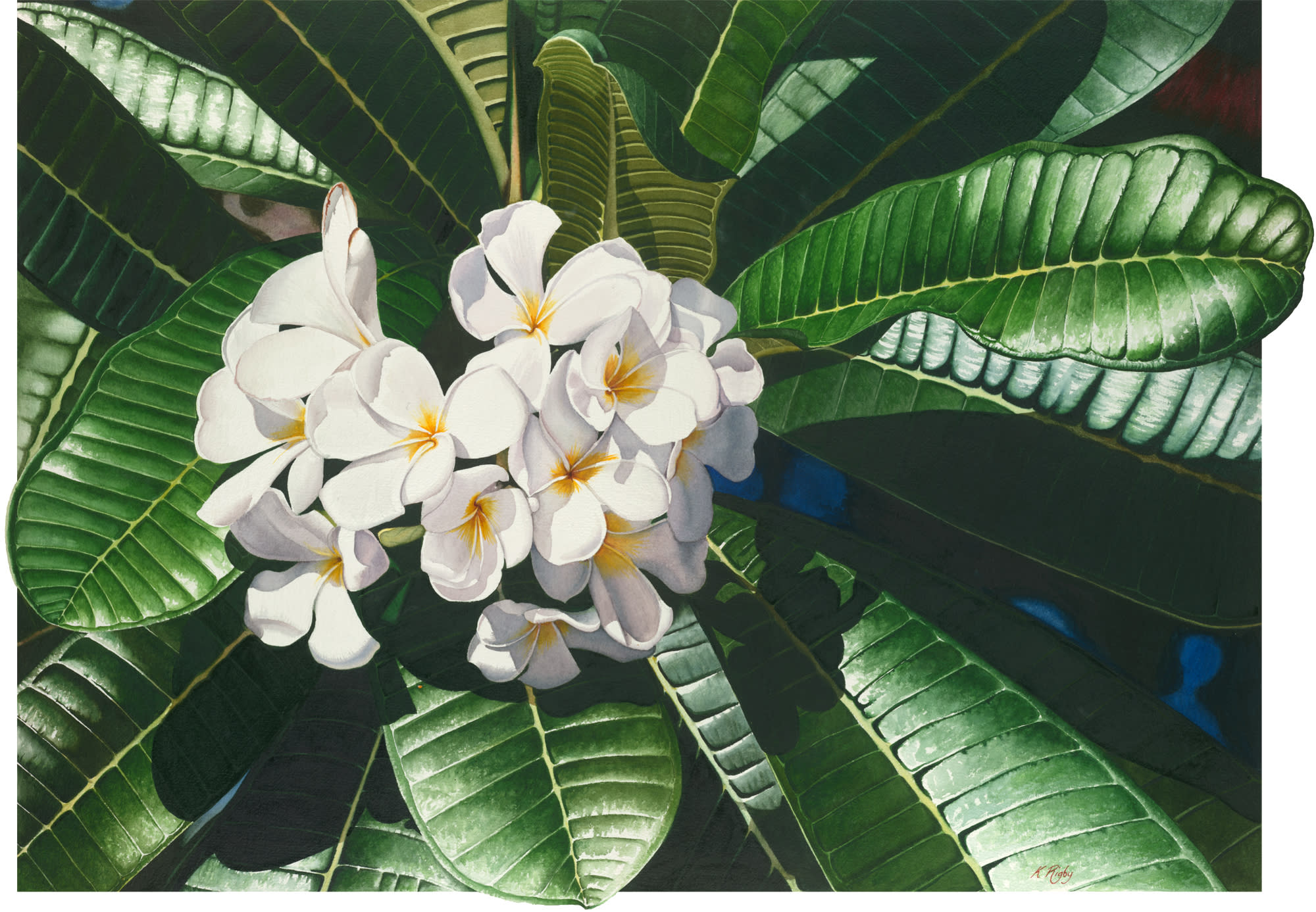 Krig 007 frangipani 84x60cm orig without extras lcerpd