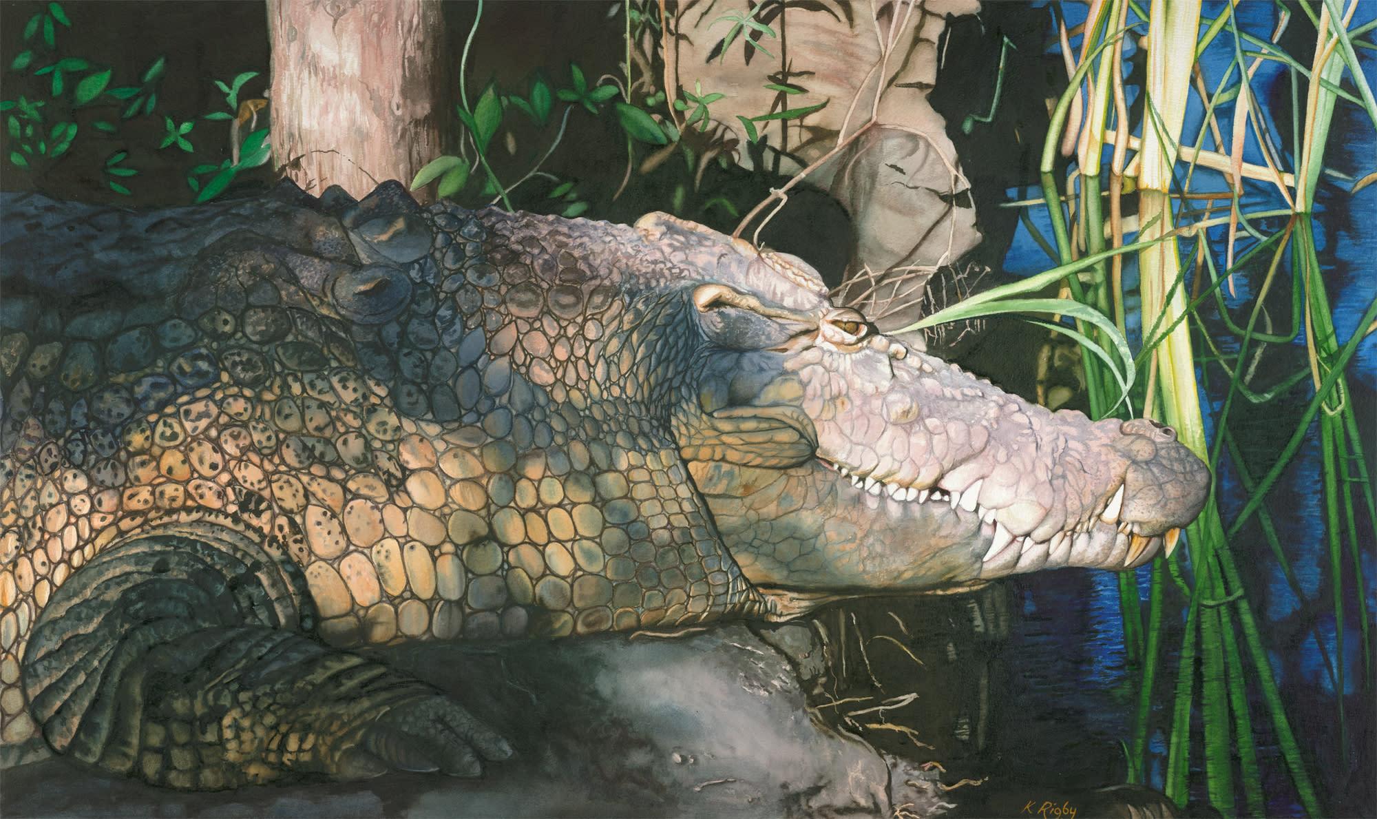Krig 012 crocodile hizlkl
