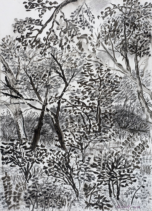 My backyard series12 ink charcoal drawing yziddv