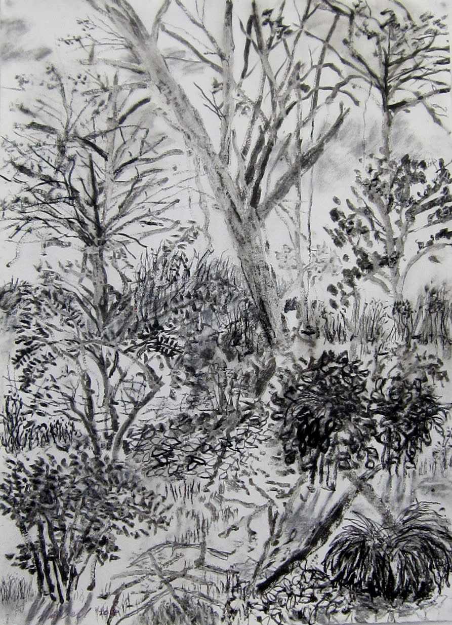 My backyard series8 ink charcoal drawing bxpzcl