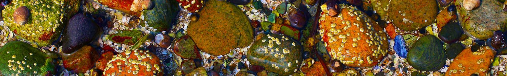 <div class='title'>           Acadia Tide Pools 002bb         </div>
