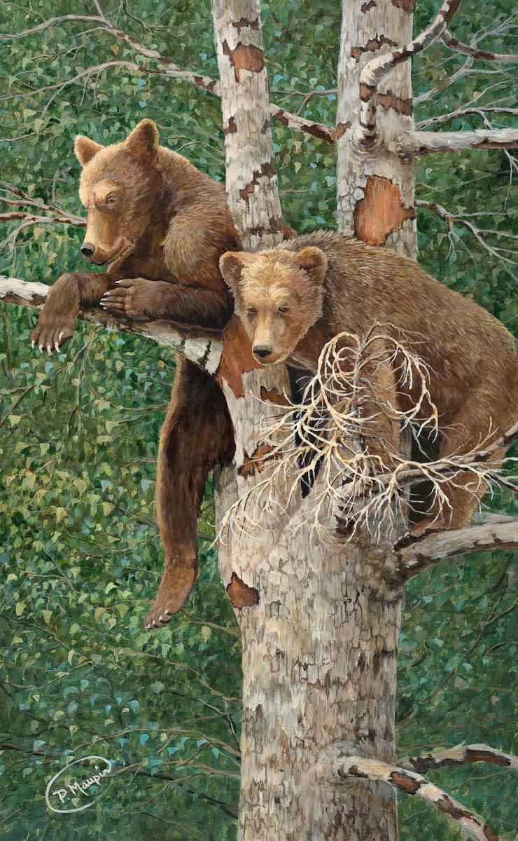 Cubs in tree lores usjaj9