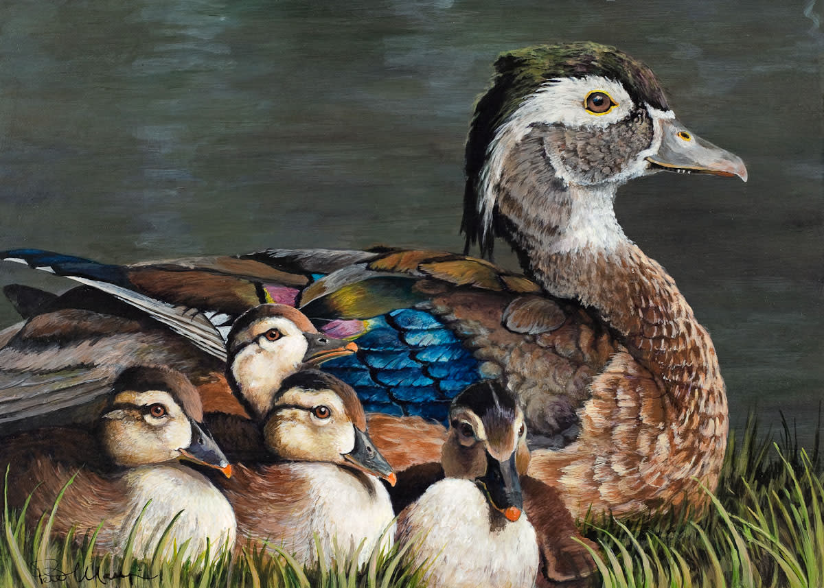 Wood duck with chicks lores bpikgo