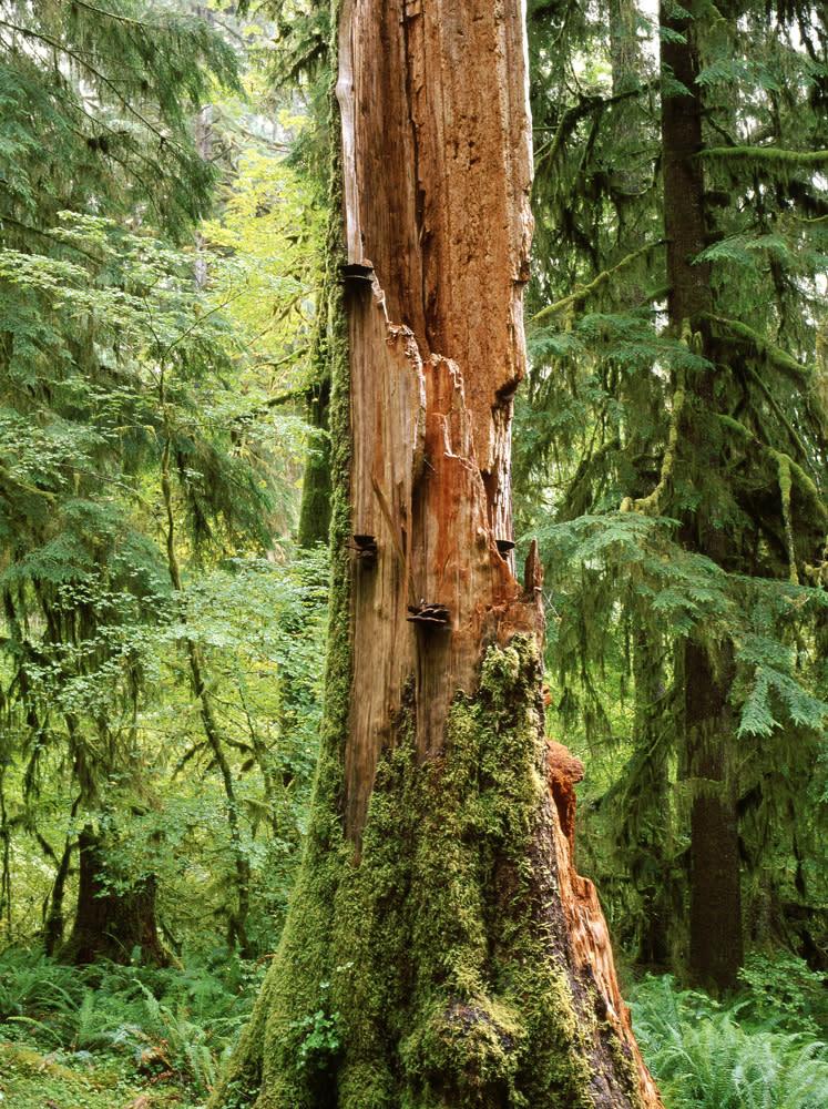 Rainforest 1 cpqgiq