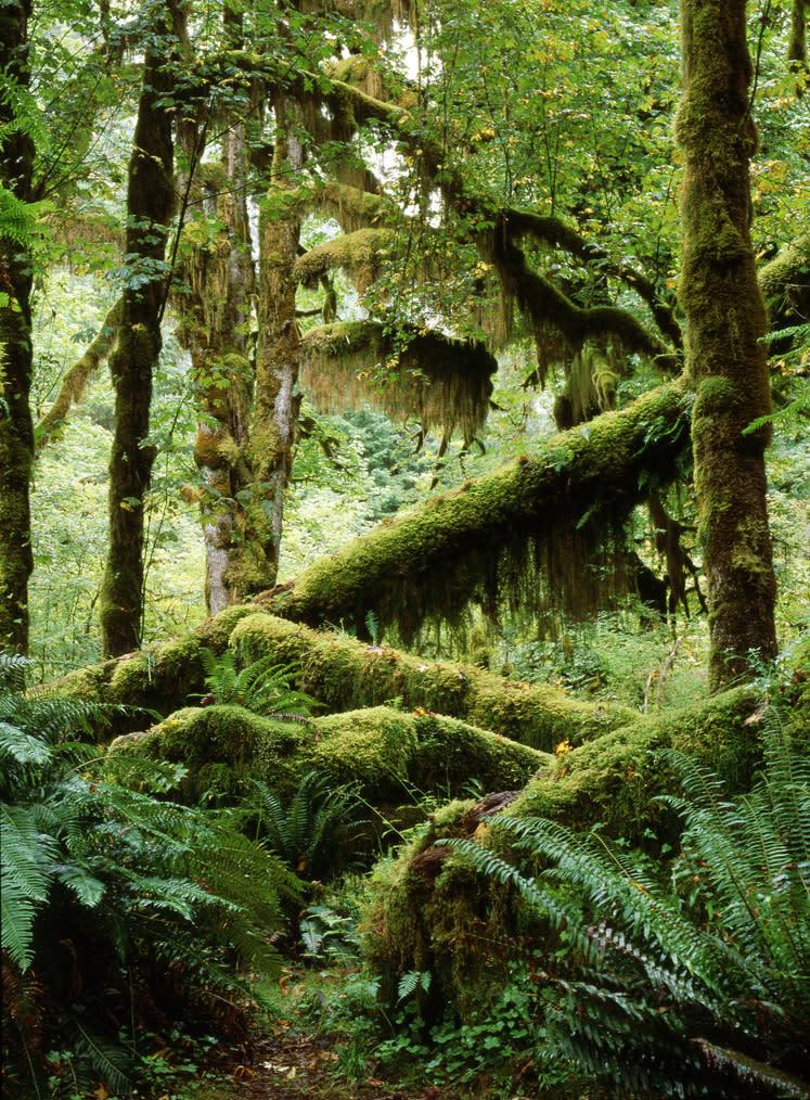 Rainforest 2 ra2bth