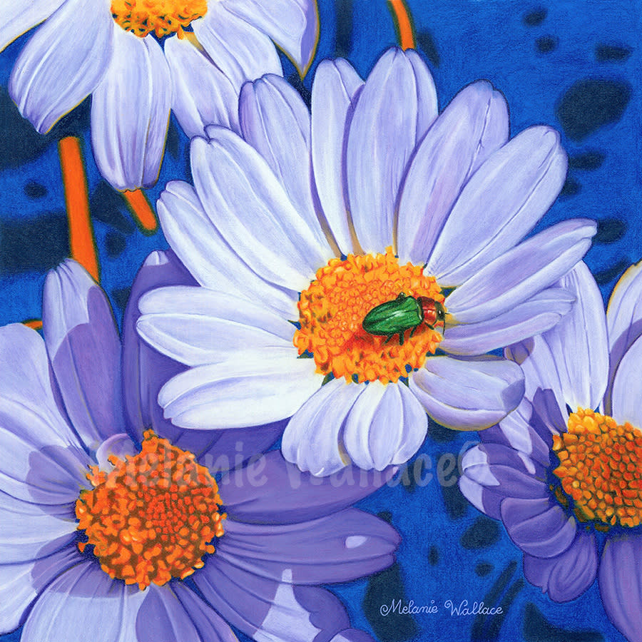 Melanie wallace title crazy about daisies 2013 cp 1of2entries vxqp7l