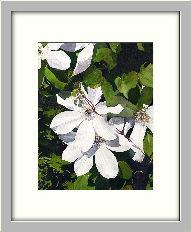 White clematis asf framed gshbxj