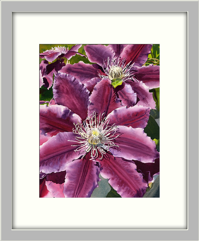 Pink clematis asf framed sxvprf