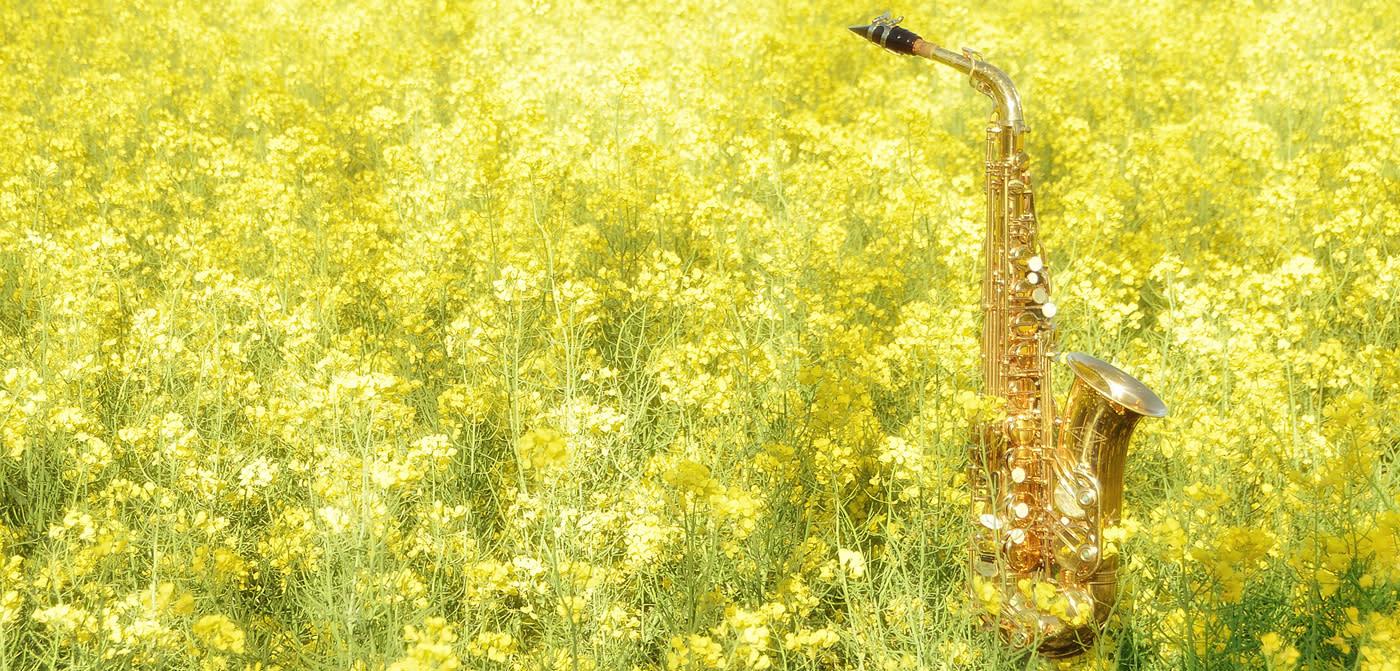 Musical Instrument Art Photographs- Shop for original music themed ...