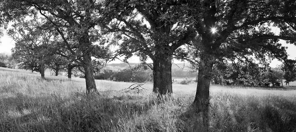<div class='title'>           Pasture Oaks for banner mini         </div>