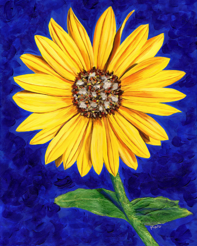 Sassy sunflower 150 cvunma