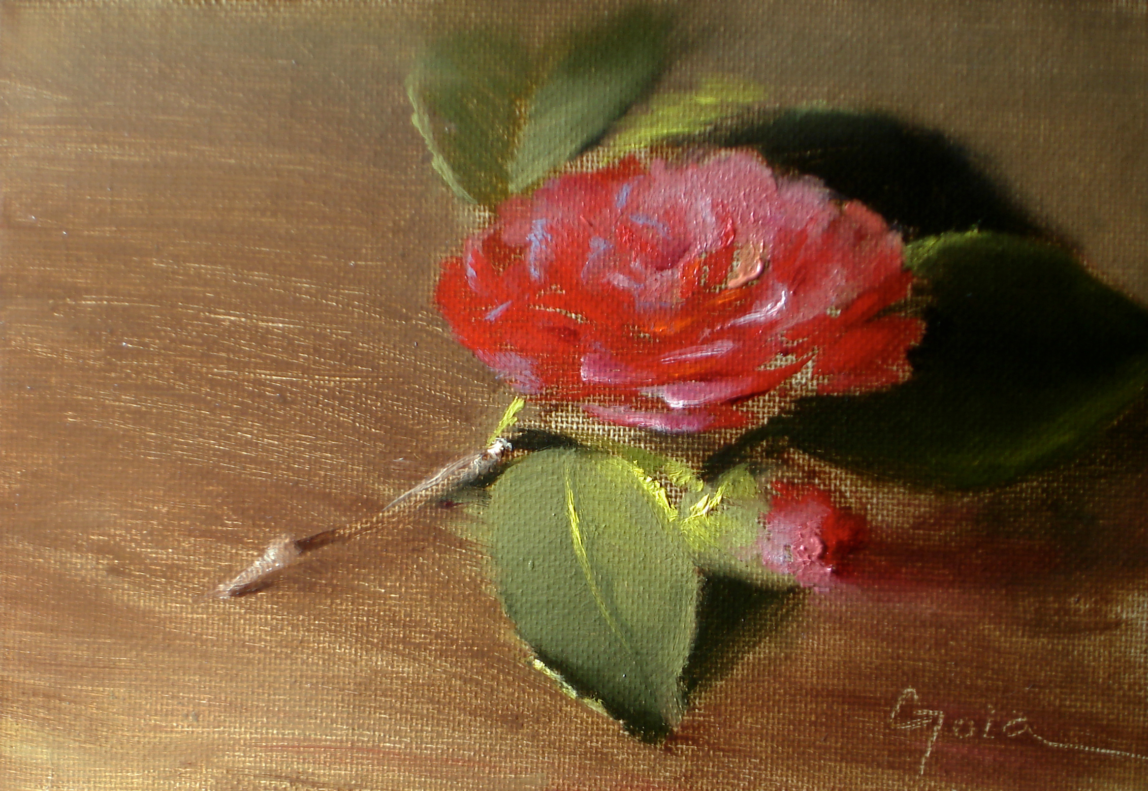 Camelliared kryitg