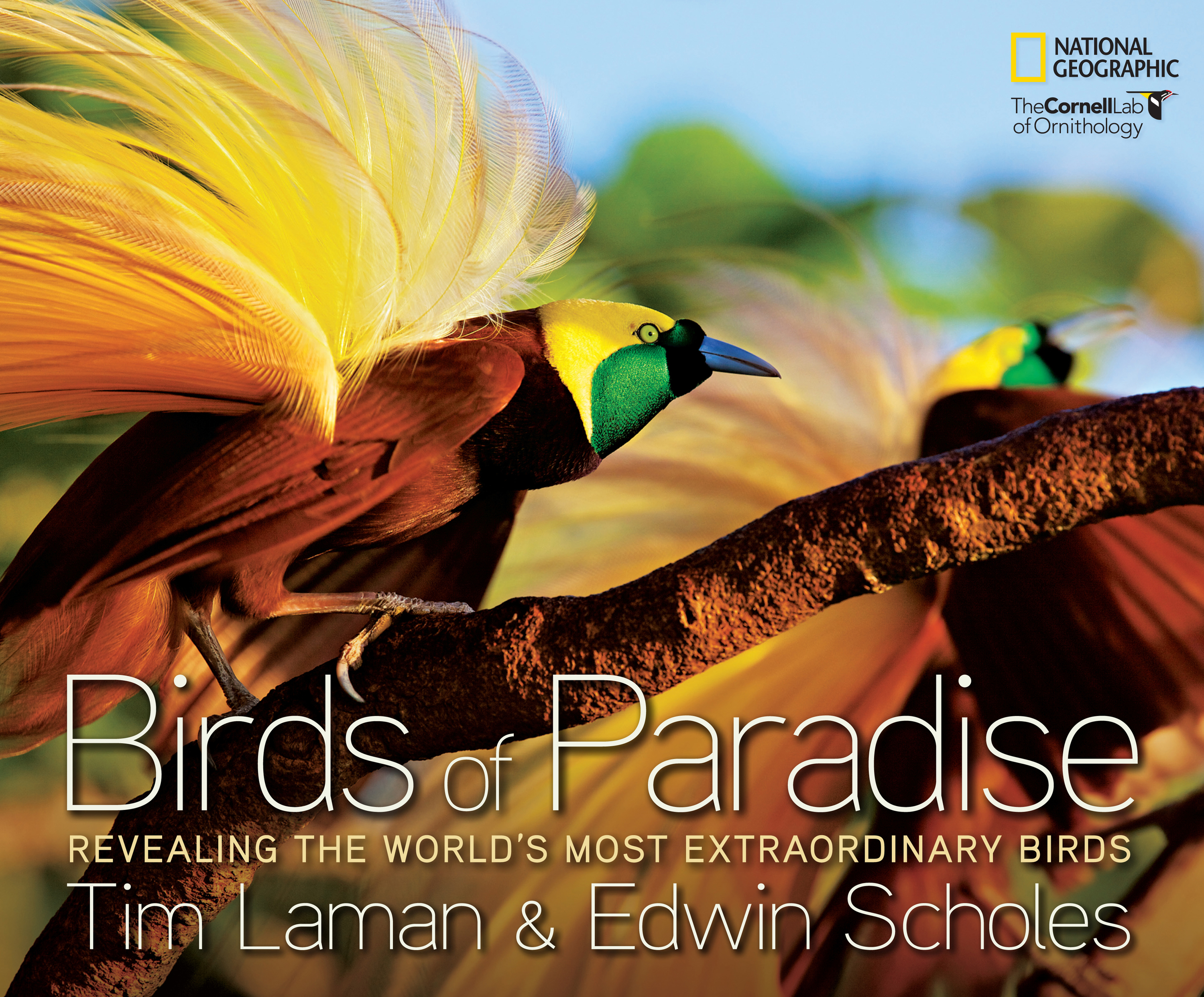 Birds of paradise book cover rzqucn
