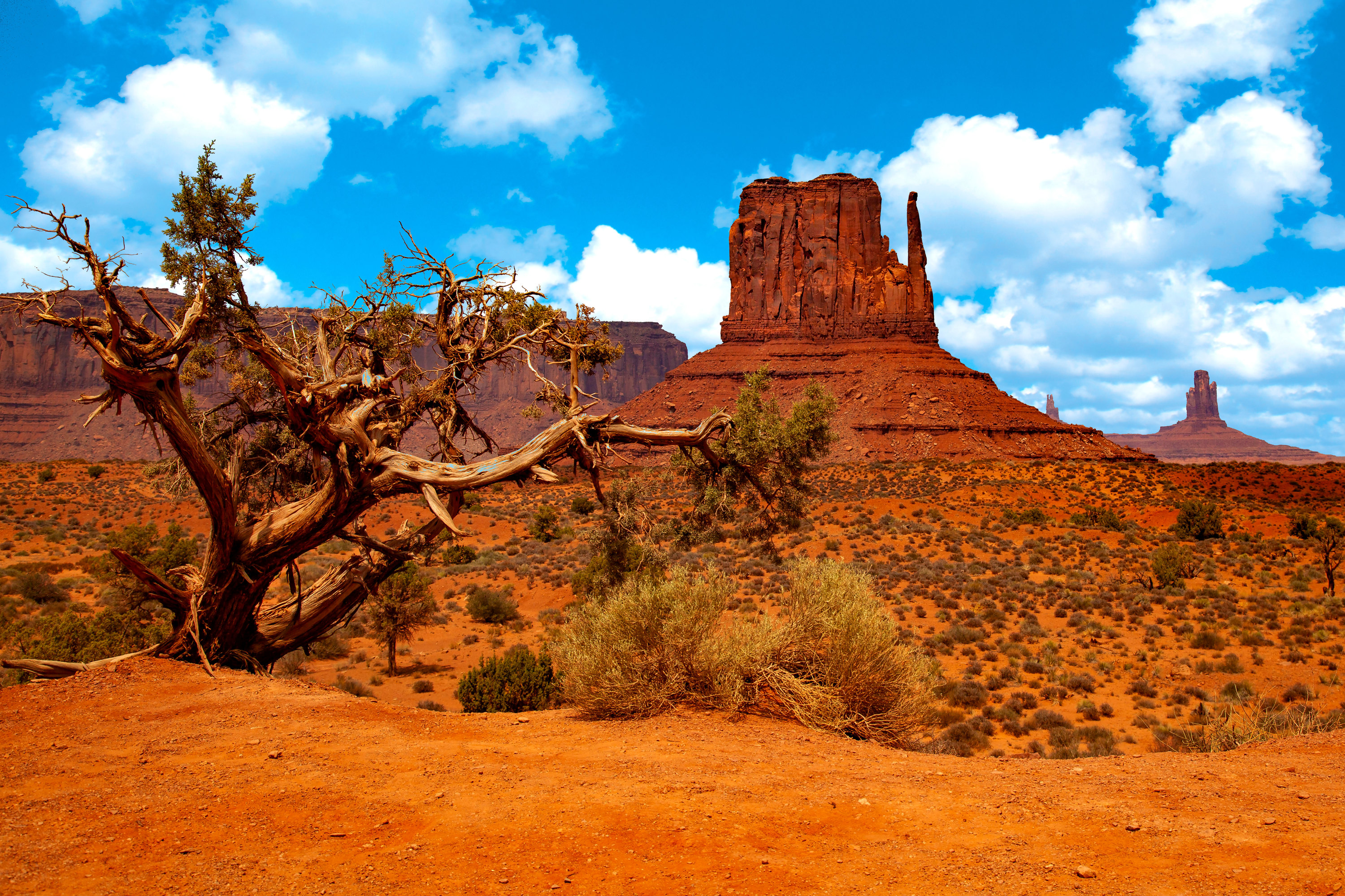 <div class='title'>           Monument Valley Tree for web         </div>