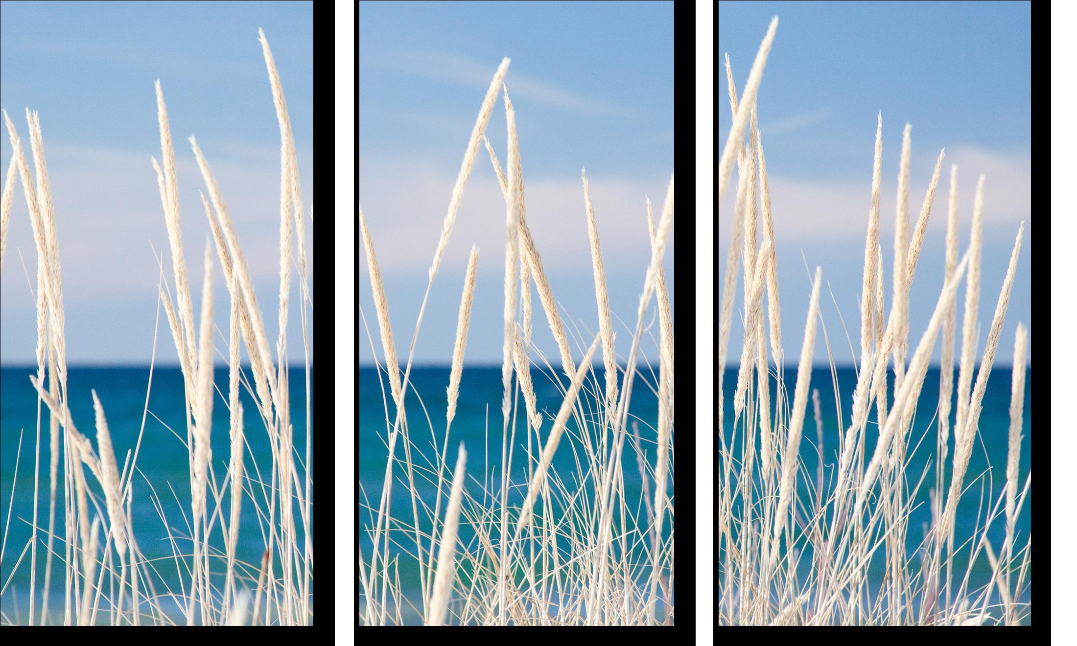 Winter bleached marram grass triptych waeldi