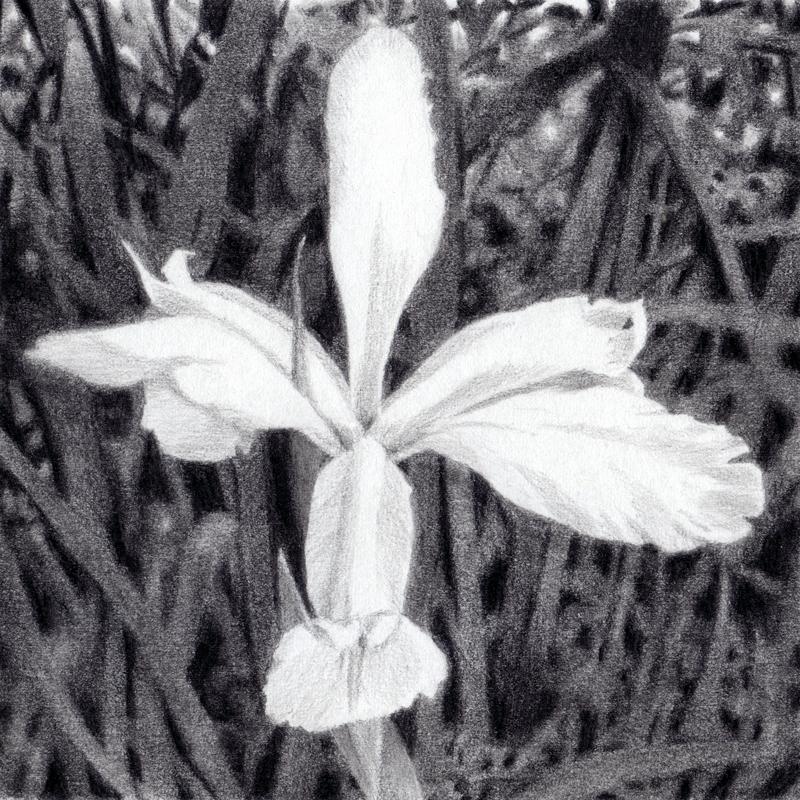 Iris clean dl7xrq